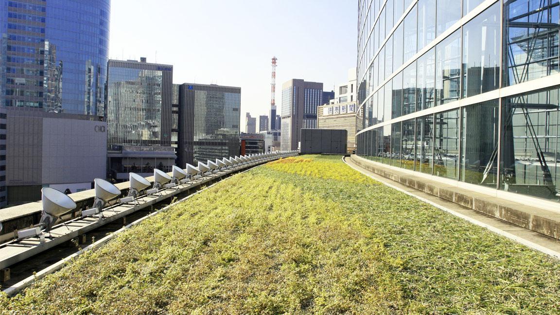 ガラス棟屋上緑地